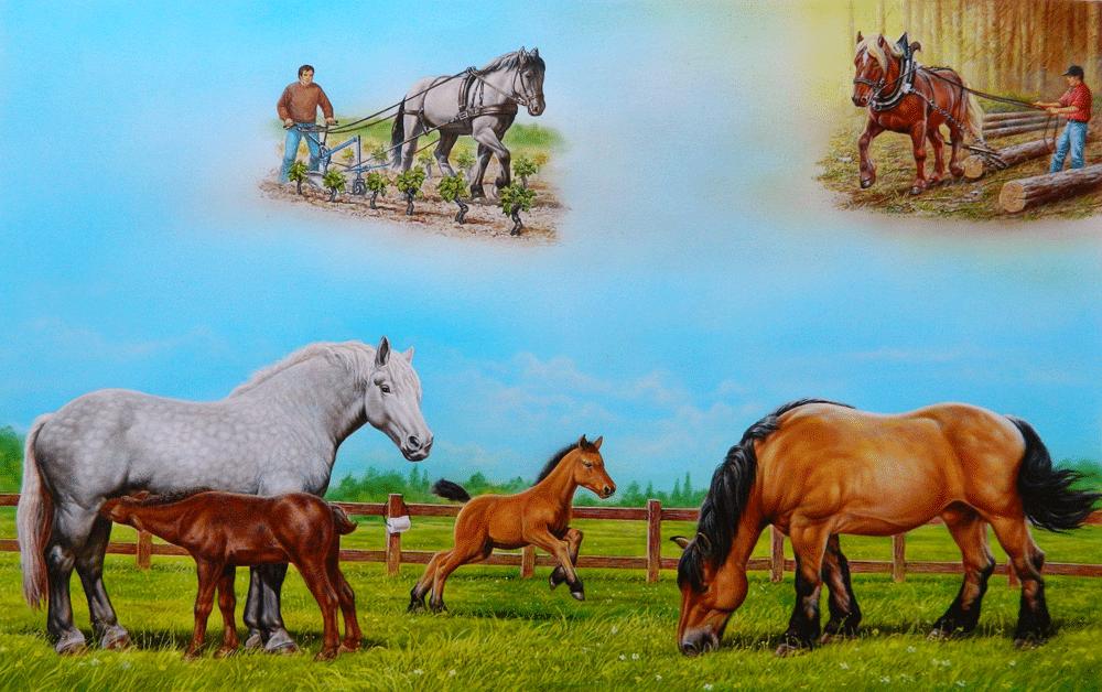 livre chevaux enfant