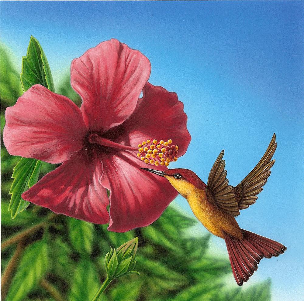 Colibri Hibiscus fleur hibiscus colibri – idée d'image de fleur